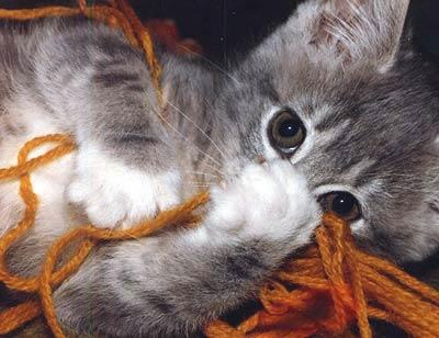 cuteycat.jpg